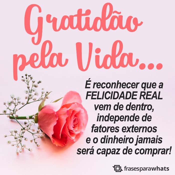 Gratidão pela Vida