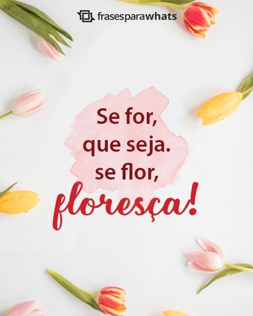 Status: se for: que seja. se for, floreça!