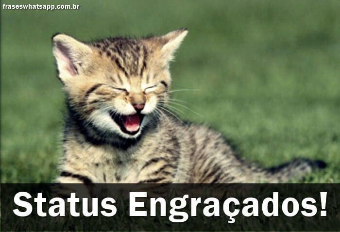 frases para status Engraçadas gatinho