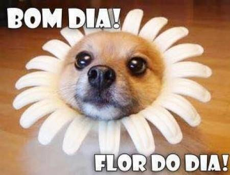 frases engraçadas de bom dia flor do dia
