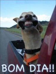 Sorria! Bom dia