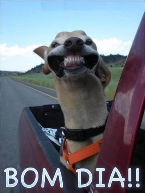 Sorria! Bom dia 1