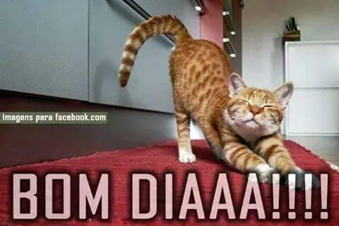 Bom dia gatinho 1