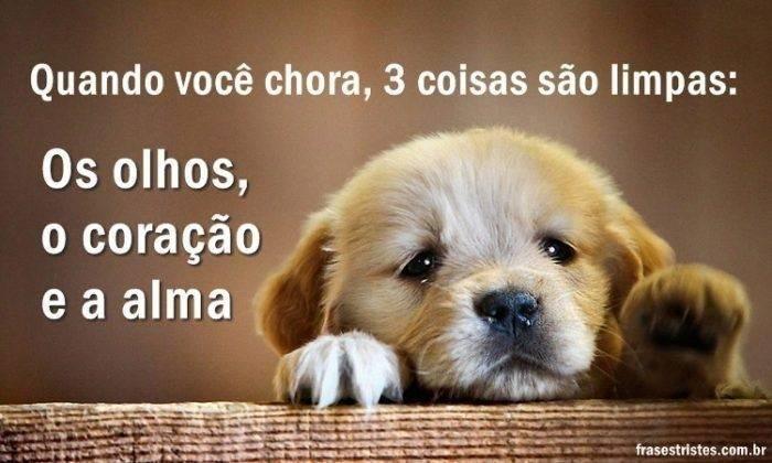 Chorar faz Bem! 3