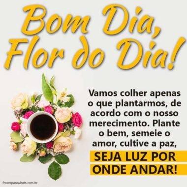 Bom Dia, Flor do Dia 5