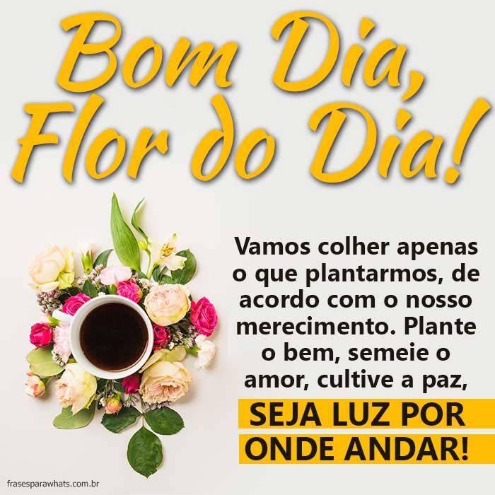 Bom Dia, Flor do Dia
