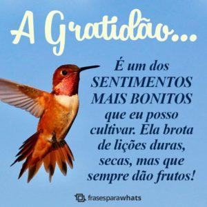 Gratidão pela Vida 3