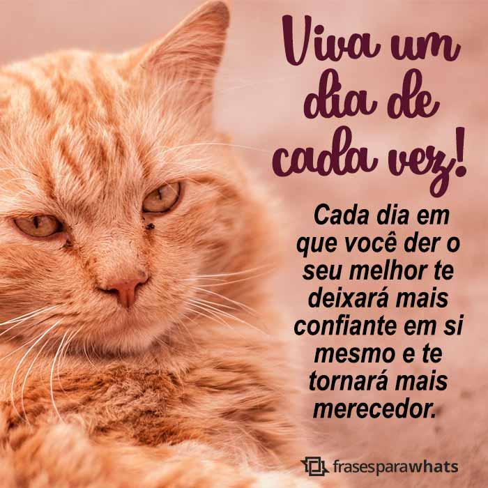 Viva Um Dia De Cada Vez Frases Para Whats