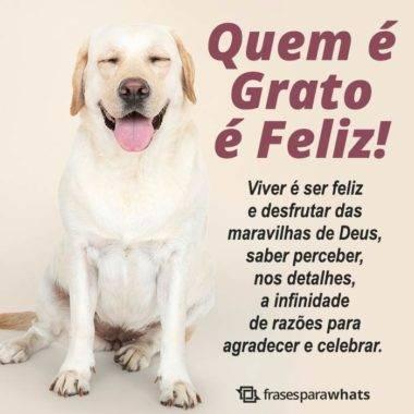 Quem é Grato é Feliz 7
