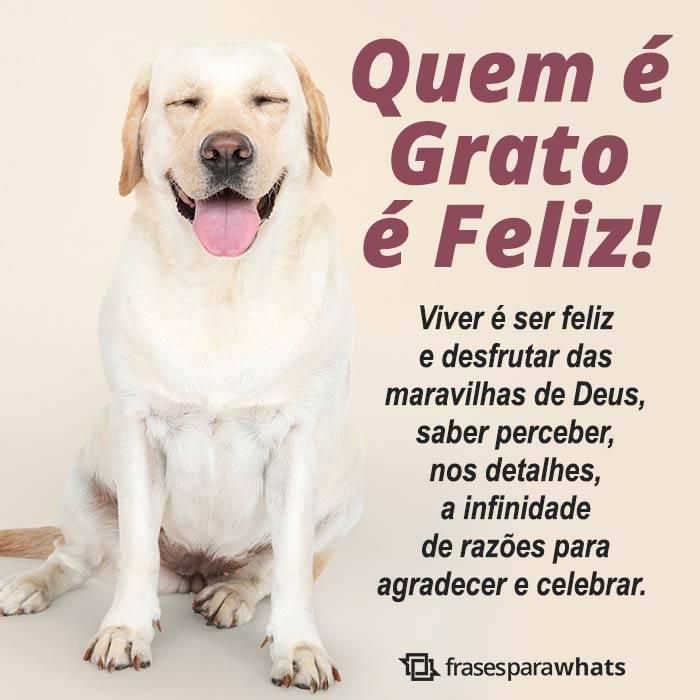 Quem é Grato é Feliz